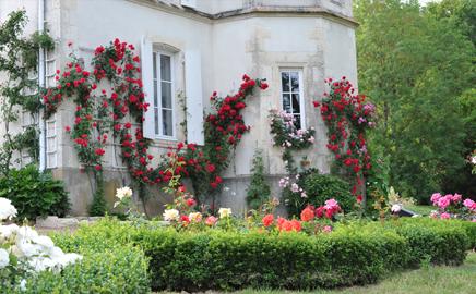 Le Château et ses Roses