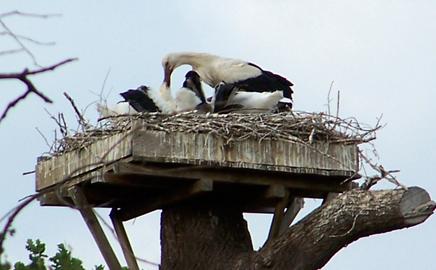 Les Cigognes de Saint-André